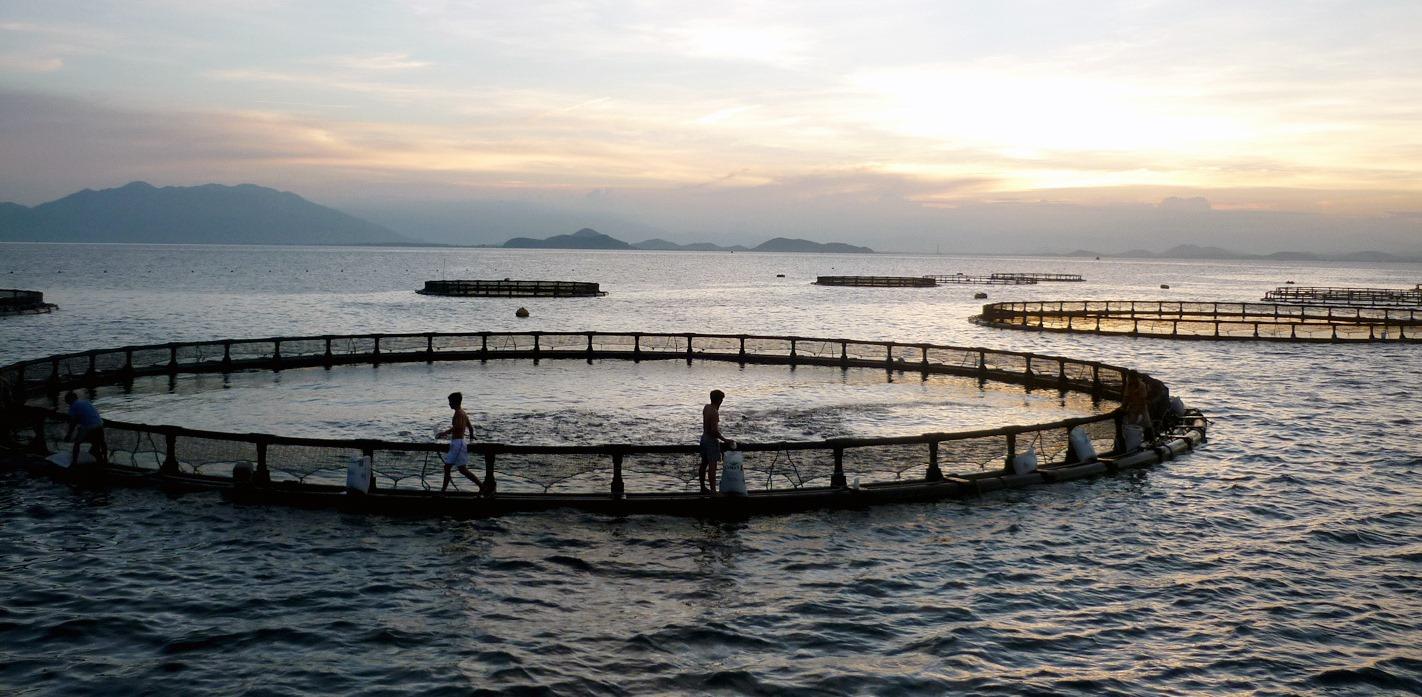 فروش قفس های پرورش ماهی