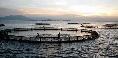 انواع تجهیزات پرورش ماهی
