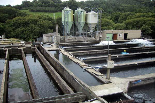 فیلتر مخصوص استخر پرورش ماهی