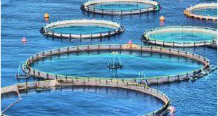 صادرات قفس پرورش ماهی