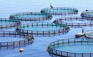قیمت قفس پرورش ماهی