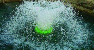 پخش عمده اسپلش پرورش ماهی