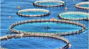 بازار خرید عمده قفس پرورش ماهی
